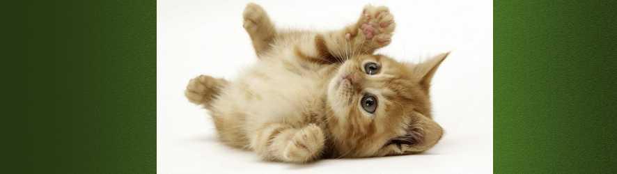 katten1.jpg